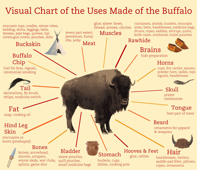 Visual Chart of the Uses Made of the Buffalo